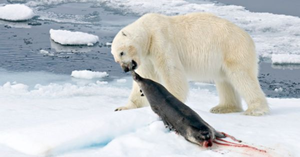 Animals That Live in the Arctic | Tundra Animals Polar ...