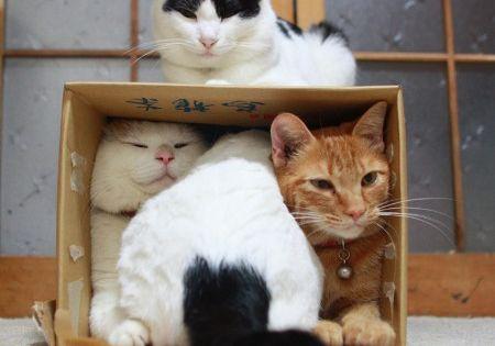 Cat trap!