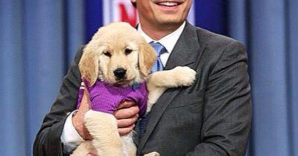 Adorable Puppies Predict The Winner Of The Super Bowl On Late