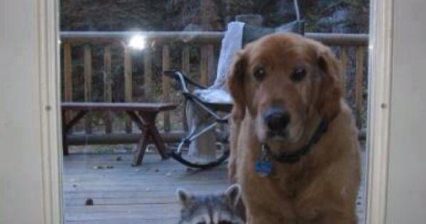 animal control in oakley ca