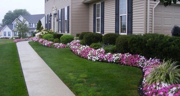 Plants For Landscaping Front Yard And Evergreens Are A Great Way To Add Structure To Your