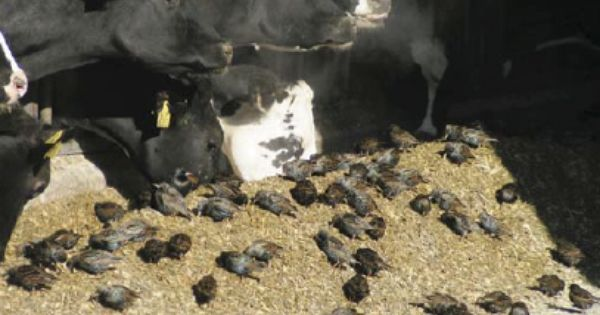 How To Get Rid Of Pigeons In My Barn