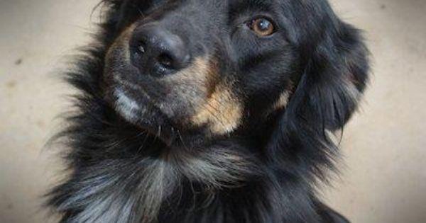 Animal Profile Moose Losing A Dog Animals Moose