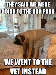 Funny Pics Humour Quotes Funny Jokes Jokes Funny Hilarious