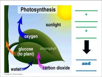 Photosynthesis Graphic With Labels Photosynthesis Photosynthesis Projects Physics And Mathematics
