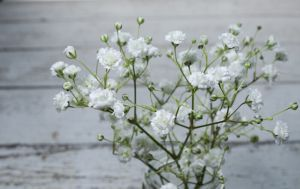 Baby Breath Flower Meaning Babys Breath Baby Breath Tattoo Babys Breath Flowers