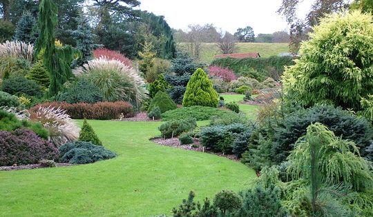 Dwarf coniferous evergreen gardens look great all year, especially winter!