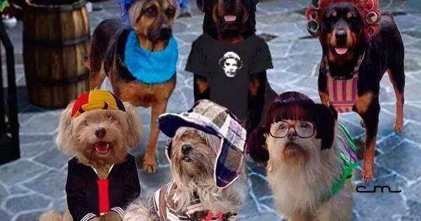 Chavo Del Ocho Version Canina Memes Perros Humor Divertido Sobre Animales Meme Gracioso