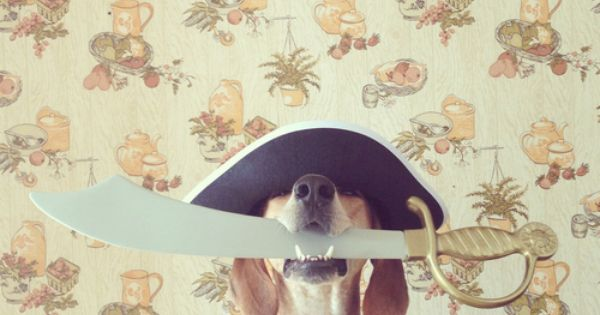 Pirate Dog Costume.... Arrrrrfff! via Maddie The Coonhound