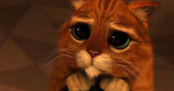 40 Adorable I M Sorry Memes People Won T Be Able To Resist Sayingimages Com In 2021 Shrek Cat Shrek Cat Wallpaper