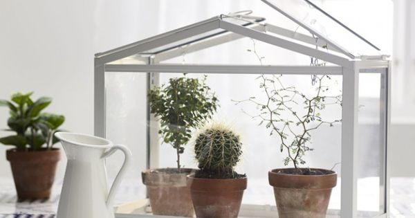 serre int rieure ikea cactus mania pinterest fleur plantes grasses et terrarium. Black Bedroom Furniture Sets. Home Design Ideas