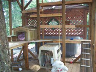 Need Photo Of Raccoon Enclosure Pet Raccoon Outdoor Pet Enclosure Habitats Projects