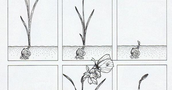 bol tot bloem 봄꽃