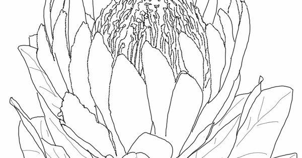 proteaflowercoloringpagejpg 1200 1600 Painting