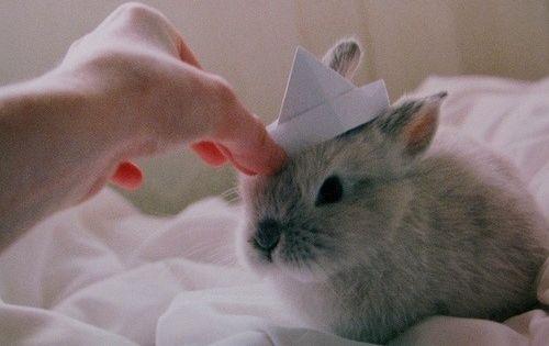baby bunny hat!