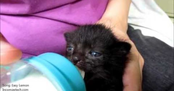 Baby Kitten Wiggles Ears While Drinking Milk From A Bottle Love Meow Baby Cats Drink Milk Baby Kittens