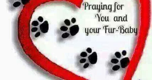 Sending Thoughts Prayers Your Way Sick Pets Prayer For Sick Dog Fur Babies