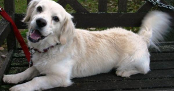 Das Kleine Schlitzohr Artos Aus Dem Tierheim Munchen Sucht Ein Neues Zuhause Und Einen Erfahrenen Und Konsequenten Tierheim Hunde Tiere Suchen Ein Zuhause