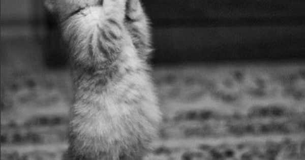 Fun Claw - Funny Cats, Funny Dogs, Funny Animals: Funny Pictures Of