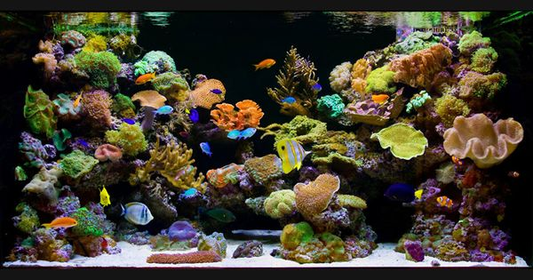 27 cool aquariums for your home home beautiful and design for Well water for fish tank