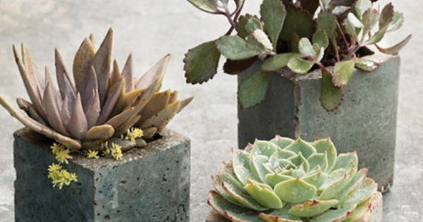 How to make Milk Carton Molds Concrete flower pots * Marthastewart //