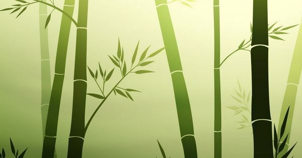Green bamboo wallpaper murals kid s room pinterest for Bamboo mural wallpaper