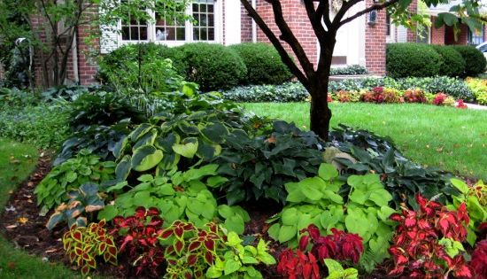 Front yard = Shade garden beds with red/burgundy from Coleus & green