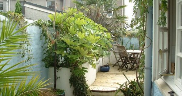 Wales Tropical Trees In Tight Urban Garden In Wales Uk U R B A N O A S I S Pinterest