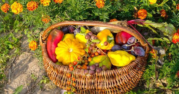 eb6a72c66e7f72a5848167a228e0ec98 - Is Borax Safe For Vegetable Gardens
