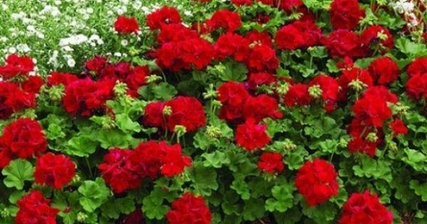 Plantas para exterior resistentes al sol dise o de - Plantas de exterior resistentes al sol ...