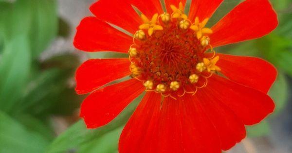 Bunga Liar Bunga Liar Bunga Kebun