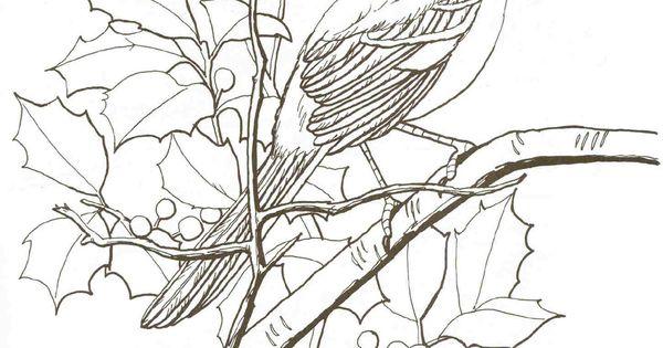 Line Art Of Mockingbird On Branch