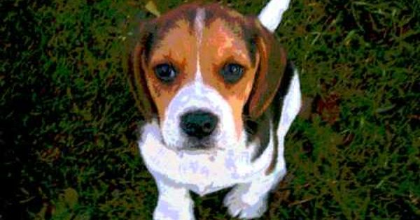 Book Trailer For Shiloh Dogs Dog Potty Training Baby Beagle