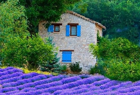 Lavender Fields, Sault, Provence, France - love the beautiful color and scent.