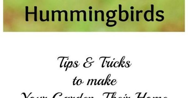 How to Attract Hummingbirds with Sensible Gardening
