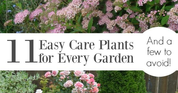 11 easy care plants for every garden and a few to avoid for Easy to care for landscaping ideas