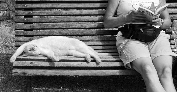 Lounging cat and reading woman on park bench; photo by Nico Chiapperini