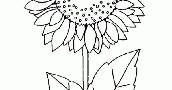Dibujo de Girasol Dibujo infantil para colorear de Girasol presentaciones Pinterest