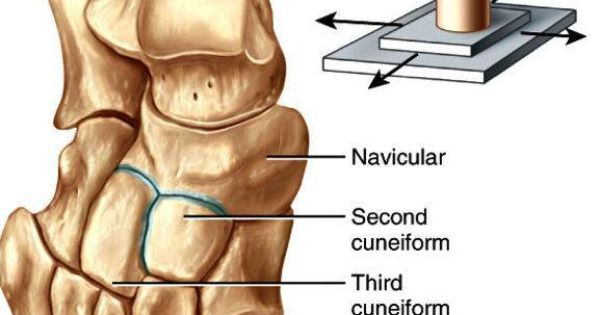 plane joint (gliding joint) : one type of synovial joint. uniaxial, Cephalic Vein