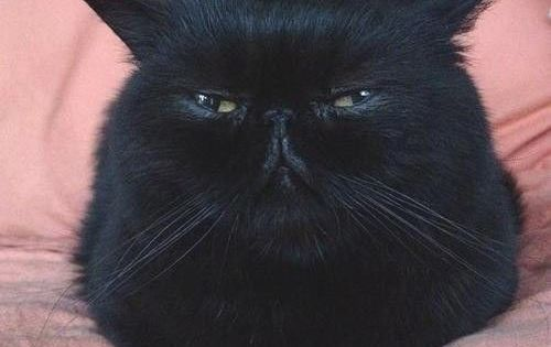 evil evil cats.