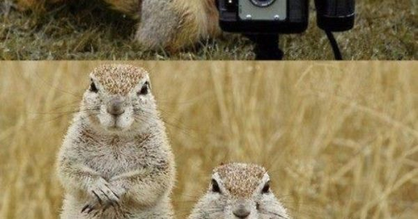 funny squirrel family pic (family photo)