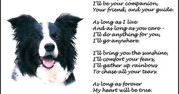 Beautiful Border Collie Print As Long As Forever Art Poem Dog Photo Verse New Collie Border Collie Dog Poems