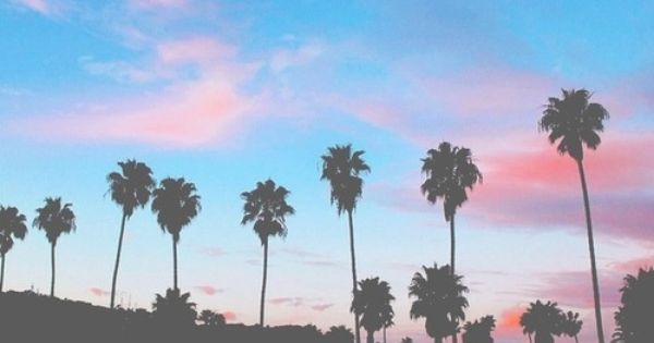 Palm trees | Headers | Pinterest