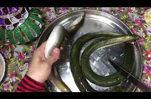 طريقة تنظيف وتحضير الحنشان او ثعبان البحر بكل سهوله Washing Machine Laundry Machine Home Appliances