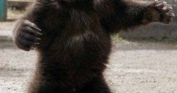I want a baby bear hug!!!