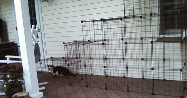 Outdoor Cat Enclosures Outdoor Screened Plex For For