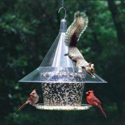 Five Inexpensive Ways To Squirrel Proof Your Bird Feeder Squirrel Proof Bird Feeders Backyard Birds Feeders Bird Feeders