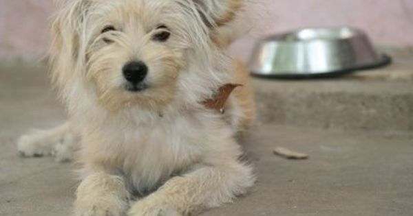 Home Remedies for Dog Tear Stains | More Stains, DIY and ...