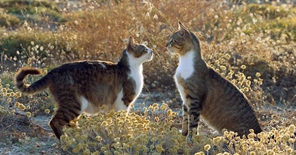 Preview Animal Groups Tabby Cat Cats And Kittens