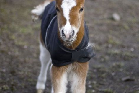 Oh my gosh. This little baby horse in its little horse blanket
